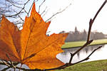 Autumn Leaf by SummerHaze132