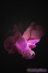 Orchidee by AmberyFlower