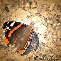 Butterfly by AmberyFlower