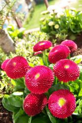 Red balls by AmberyFlower