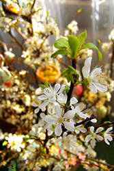 Crazy spring by AmberyFlower