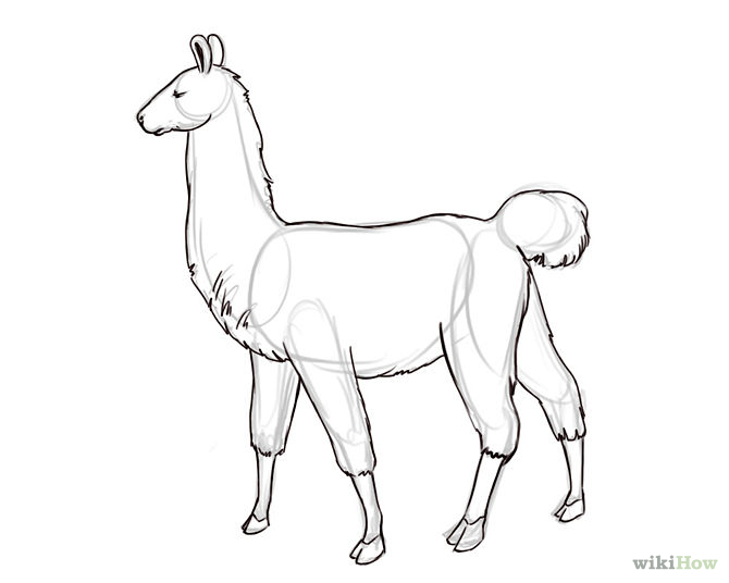 Line Drawing Llama : I nead lama by mistytehbroeny on deviantart