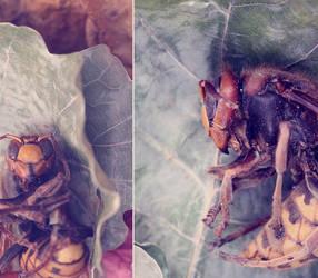 Wasp by LiaSelina