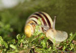 Snail 1 by MBSnapshots