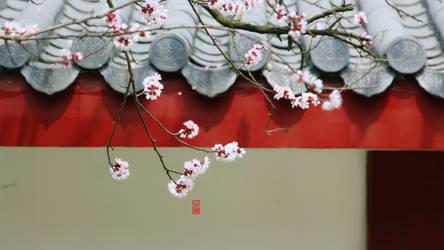 The whisper of Sakura. by DrawHui
