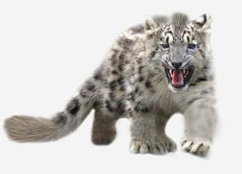 Tabris,the krenshar cub
