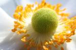 White flower, sunlight, macro