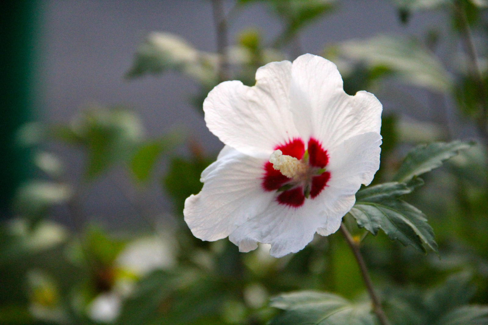 White Flower With A Bit Of Red In The Middle By Emoshunka On Deviantart