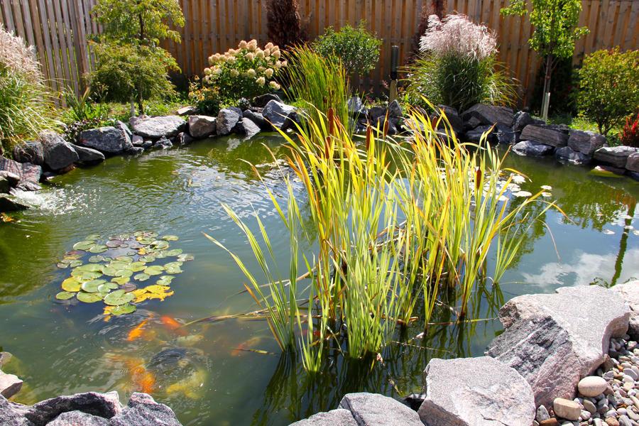 Koi fish pond 20 by emoshunka on deviantart for Garden pond reddit