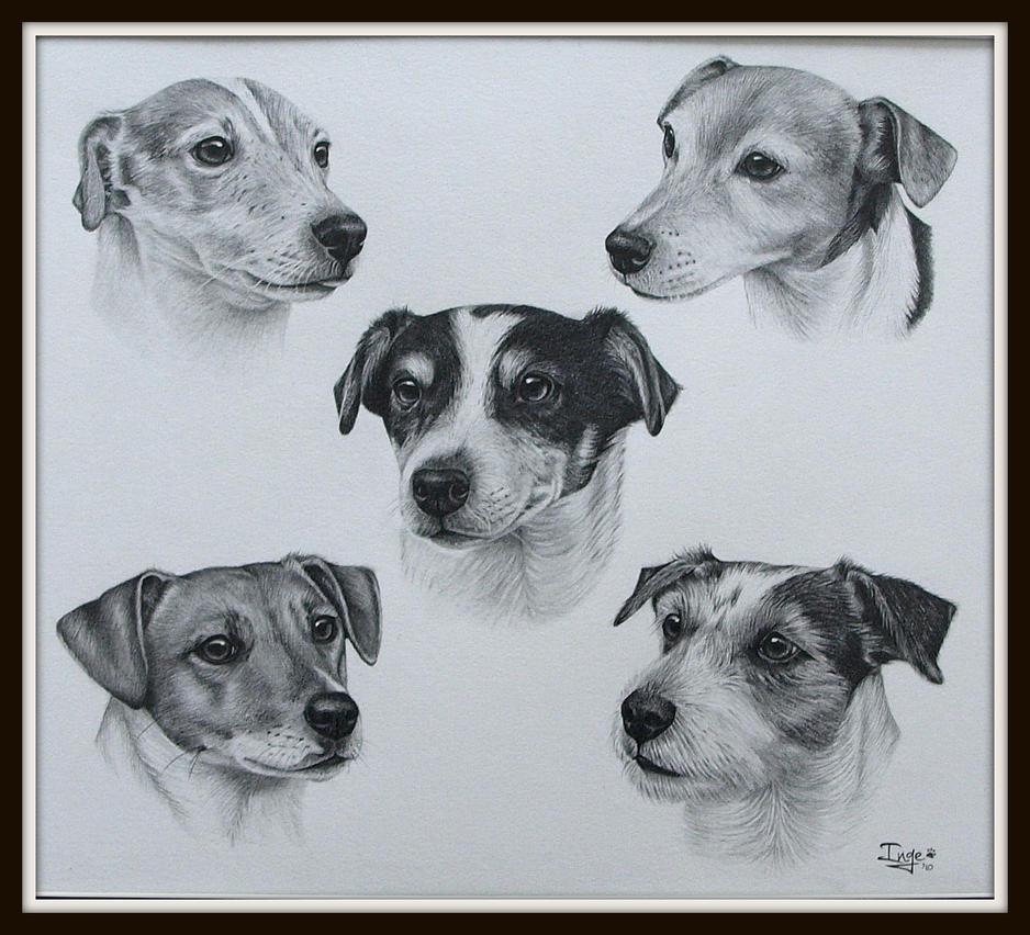 5 Jack Russel Terrier by IngeLammers