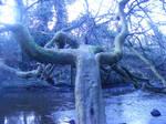 Creepy Tree stock 2