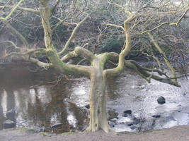 Creepy tree stock 3 by Jrennie1984-stock