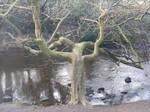 Creepy tree stock 3