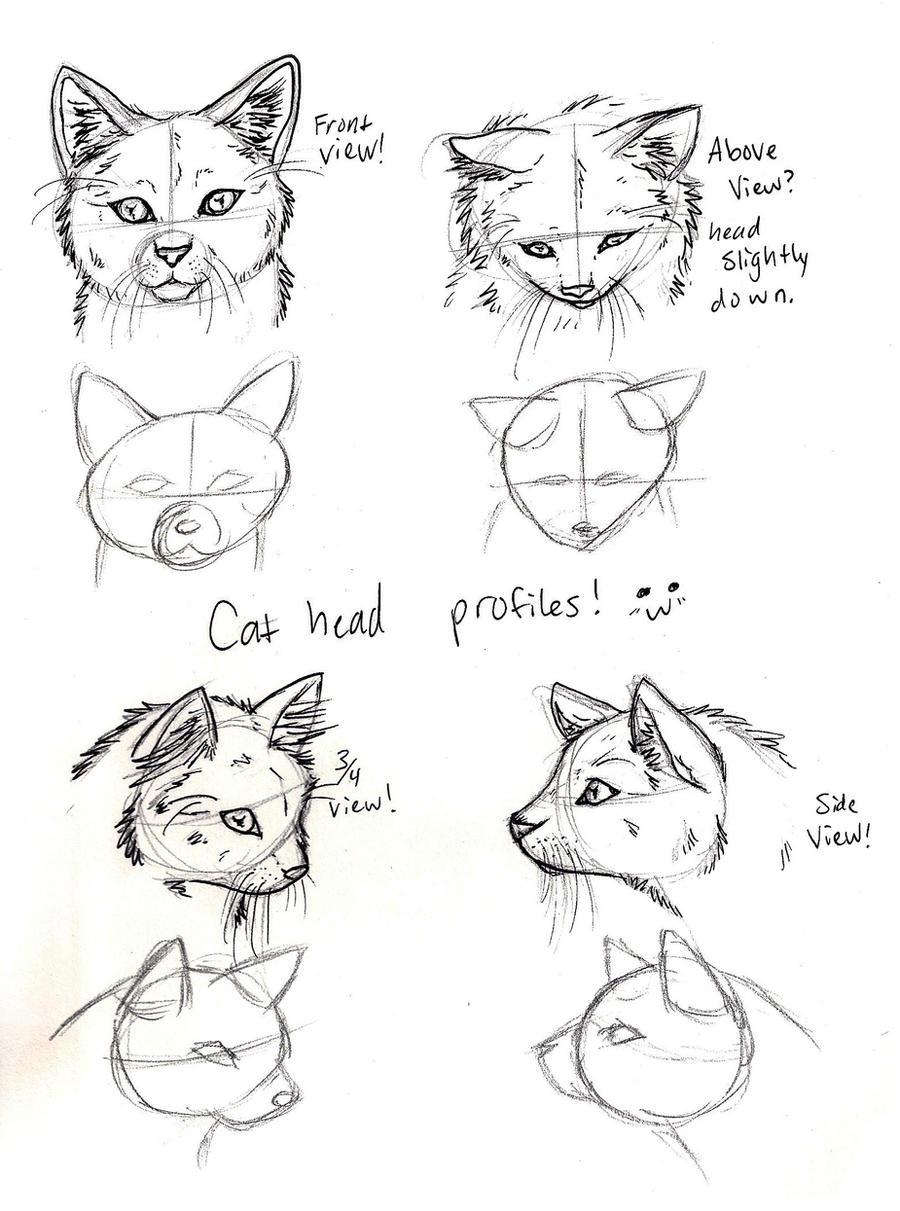 Cat_Head_Views_by_CrossHound213.jpg