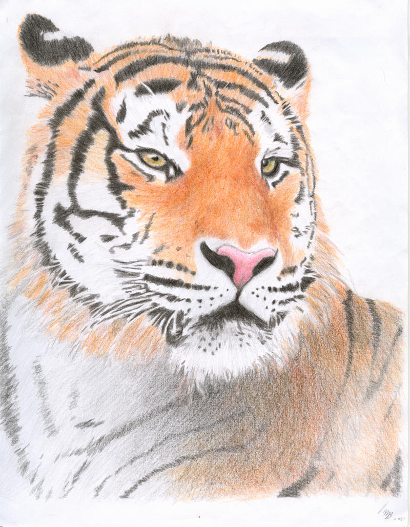 Pencil drawings colored pencil drawings of animals