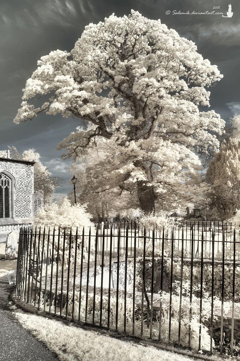 Shiny tree... by Salemik