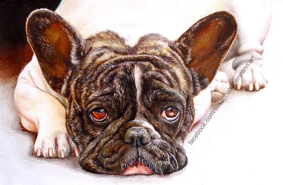A dog by Saphienna