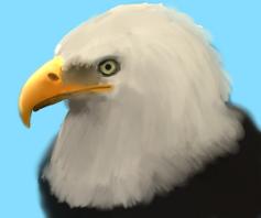 Bald Eagle by BuggerTheFox