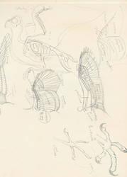 Study of the Bird