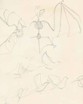 Study of the Bat