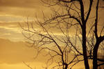 yellow sky, black branches