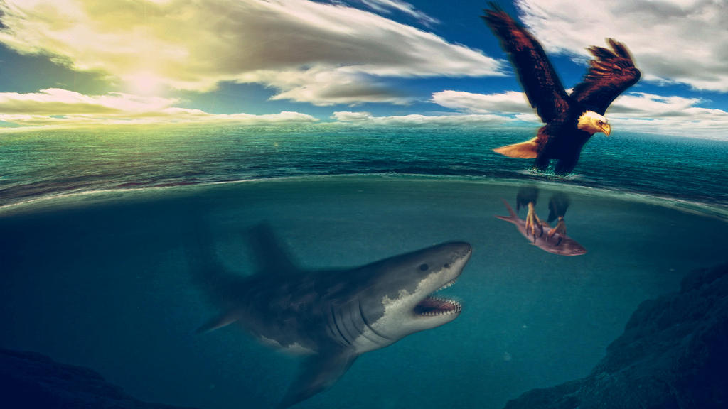 Eagle vs Shark by Jcrlsrmrz on DeviantArt
