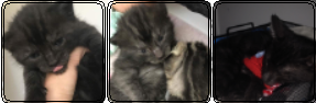 Karma The Kitty by EminAnimal