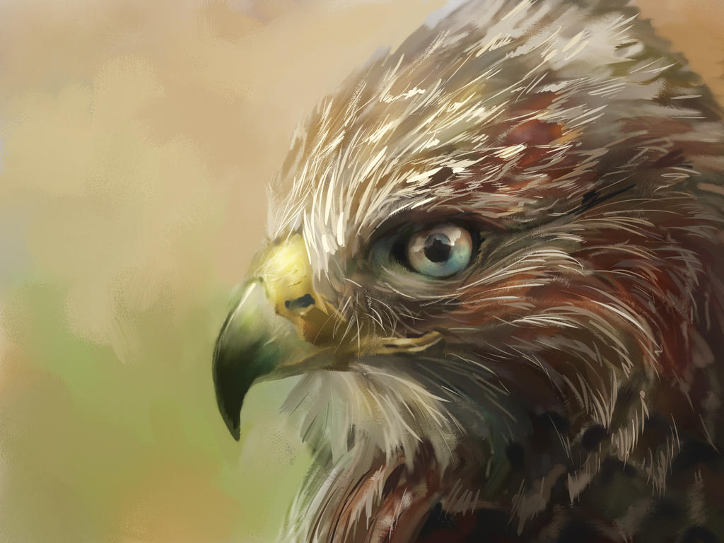 Hawk painting watercolor - photo#24