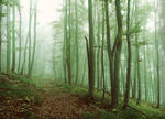 Misty Green Forrest