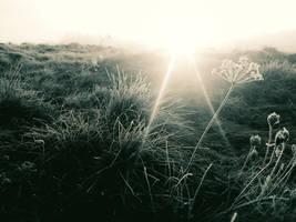 Chilly Morning by VBmonkey26