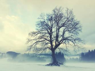 Big Oak Tree 2 by VBmonkey26