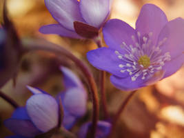 Spring Flowers 2 by VBmonkey26