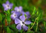 Spring Flowers 7