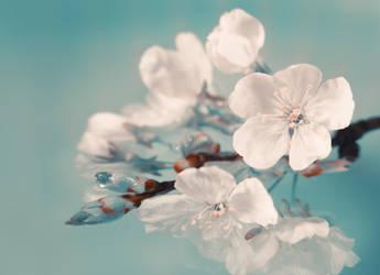 Cherry Blossom by VBmonkey26