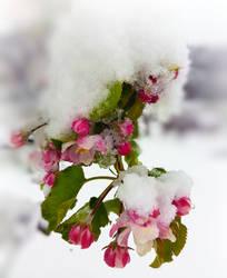April Snow by VBmonkey26