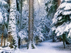 Snowy Forest by VBmonkey26