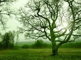 Green Day by VBmonkey26
