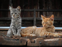 Meow Meow by VBmonkey26