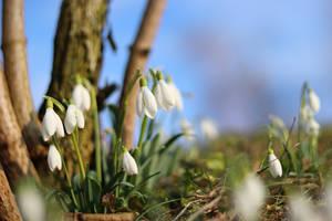 It's Springtime! by VBmonkey26