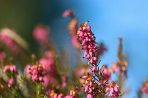 Colorful Flowers Of Spring by VBmonkey26