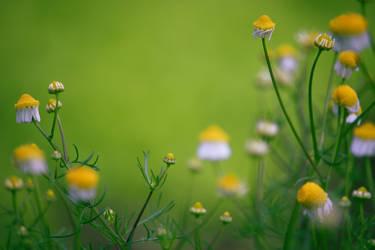 Camomile Lawn by VBmonkey26