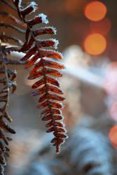 Frozen Fern by VBmonkey26