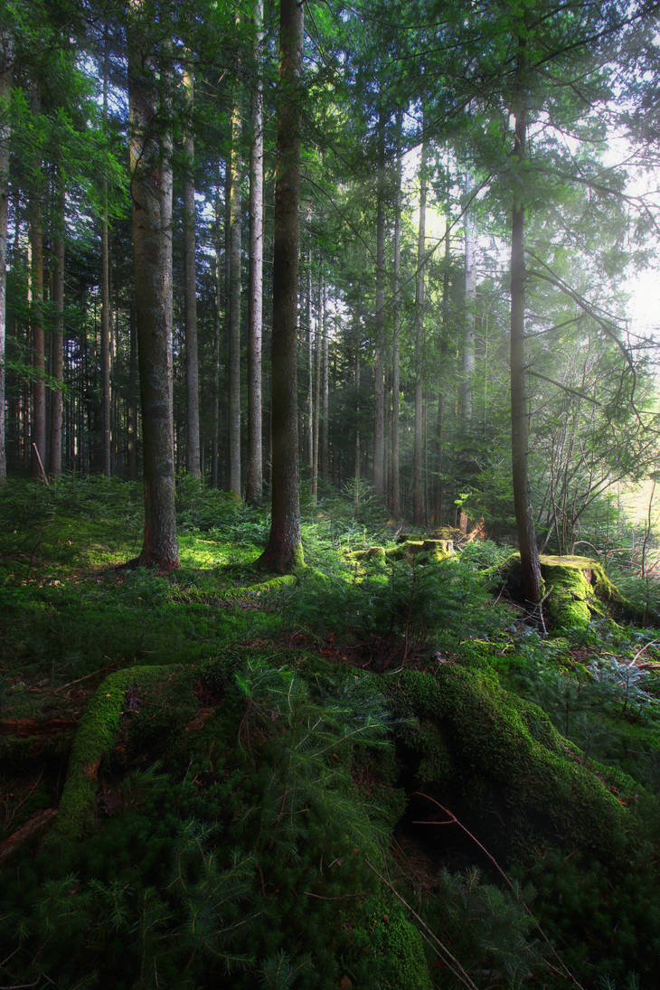 Green Forest by VBmonkey26
