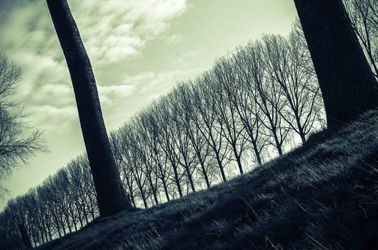 - Following Nature -
