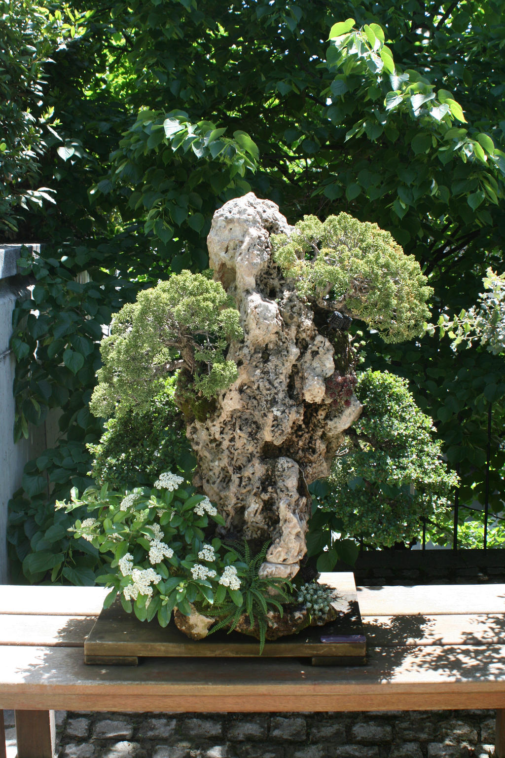 Bonsai from real jardin botanico de madrid by khetry on for Jardin botanico madrid