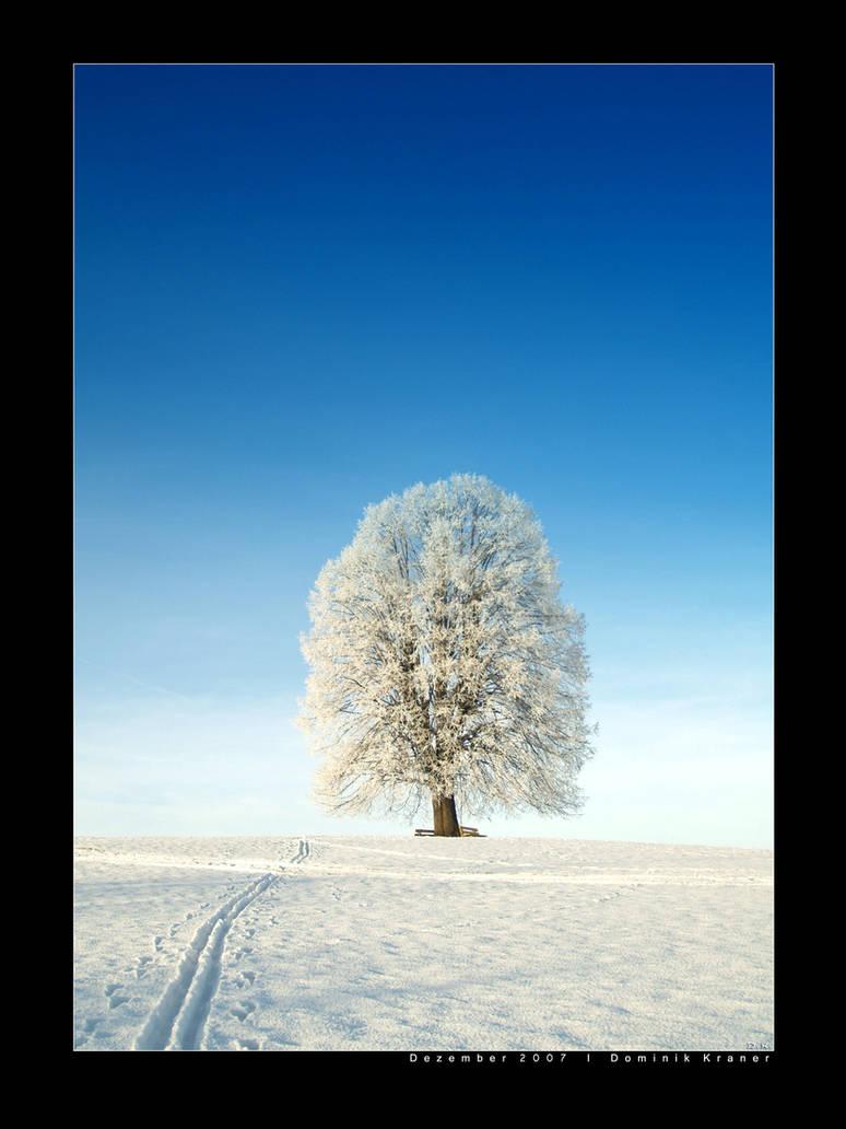 Winter II by dkraner