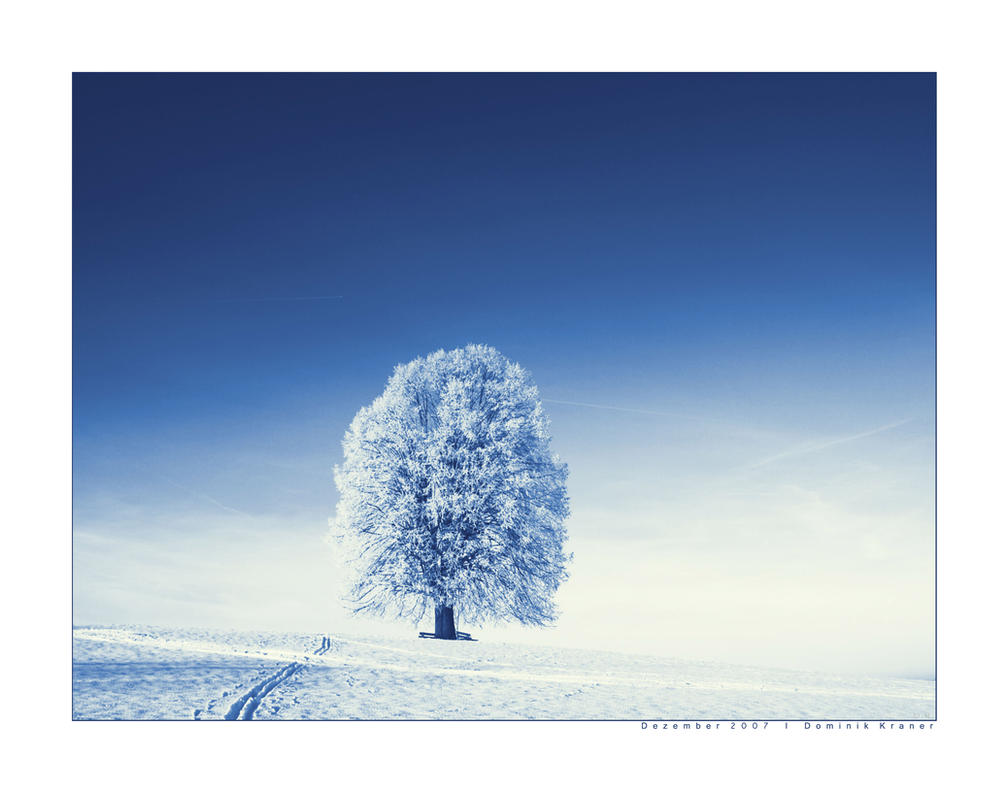 lonely tree by dkraner