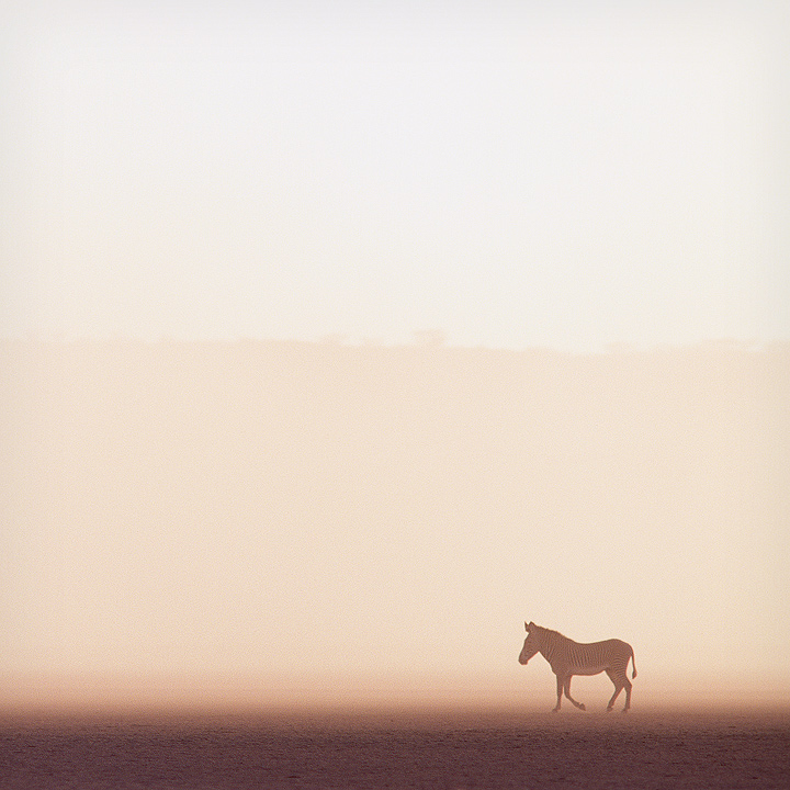 dust storm by grevys