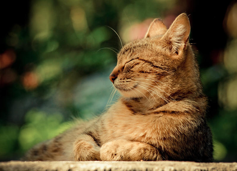 Relaxing cat by Balopp