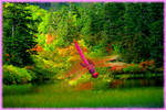 Pink Dragonfly (3)